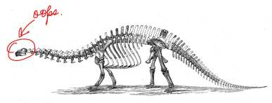 Brontosaurus illustration from 1896