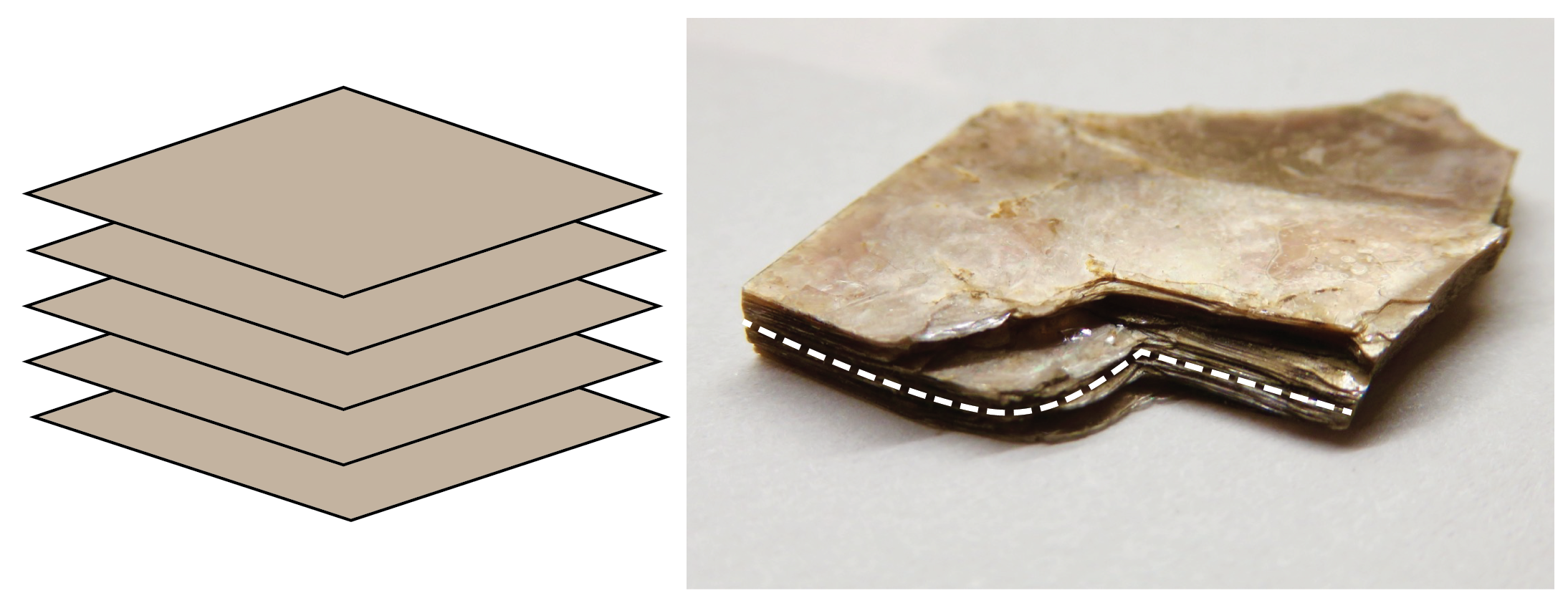 Left: Schematic of basal cleavage. Right: Muscovite mica showing basal cleavage. The white dashed line marks the edge of the cleavage plane. [KP]